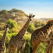 Safari & strand Kenia