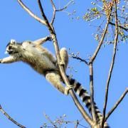 Hoogtepunten Madagaskar